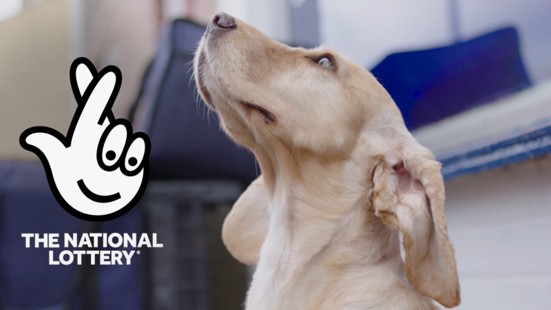 A video about how different organisation from the UK help people in need with pets, from dogs to horses.